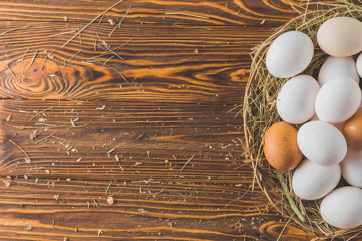 Her Gün Bir Yumurta