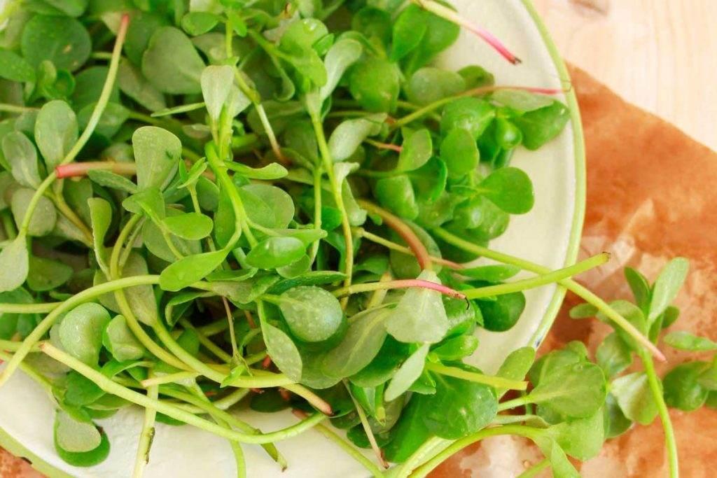 Peynirli Kuruyemişli Semizotu Salatası Tarifi